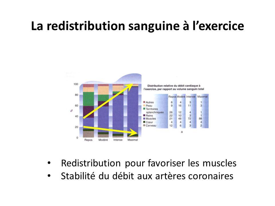 La redistribution sanguine à lexercice Unité 1 – Principe de la physiologie de lexercice et évaluation de lexercice Redistribution pour favoriser les