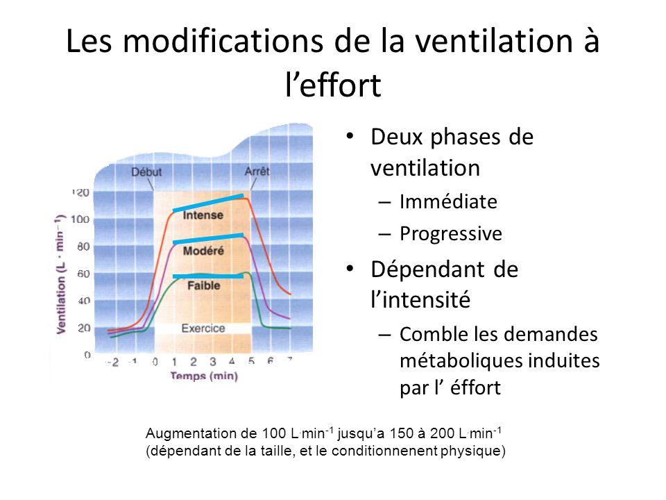 Les modifications de la ventilation à leffort Deux phases de ventilation – Immédiate – Progressive Dépendant de lintensité – Comble les demandes métaboliques induites par l éffort Augmentation de 100 L.