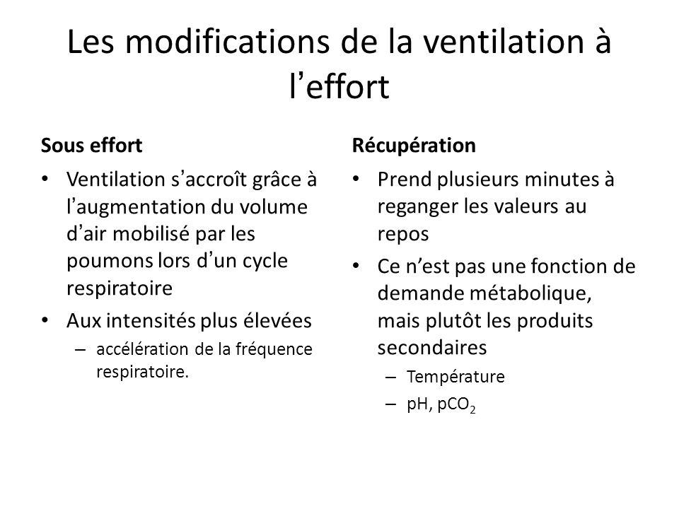Les modifications de la ventilation à leffort Sous effort Ventilation saccroît grâce à laugmentation du volume dair mobilisé par les poumons lors dun cycle respiratoire Aux intensités plus élevées – accélération de la fréquence respiratoire.