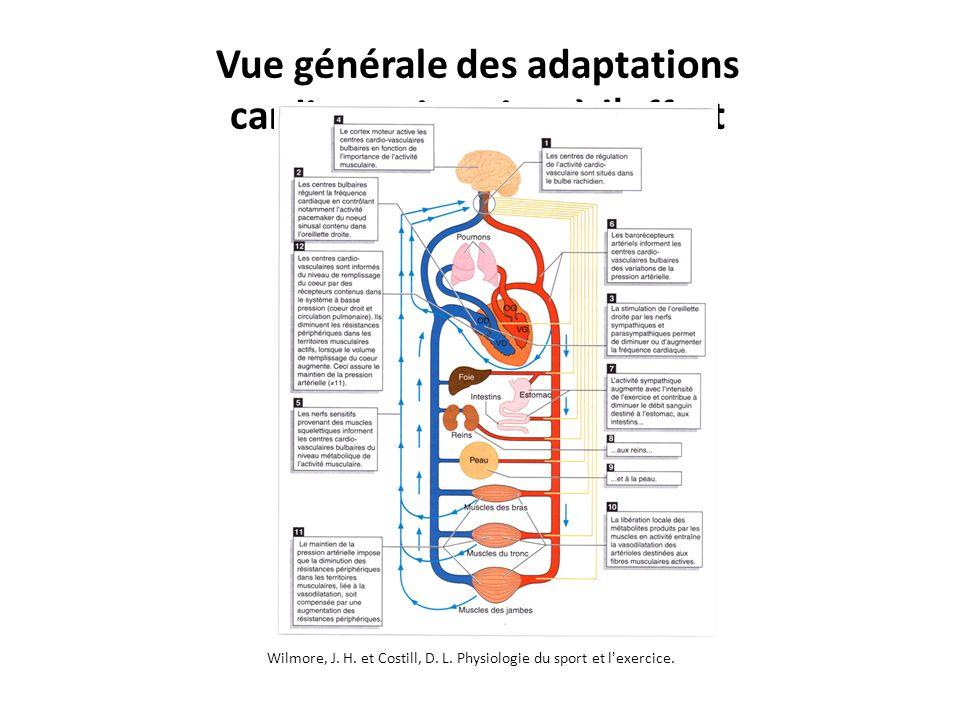 Vue générale des adaptations cardiorespiratoires à l effort Wilmore, J. H. et Costill, D. L. Physiologie du sport et lexercice. Unité 1 – Principe de