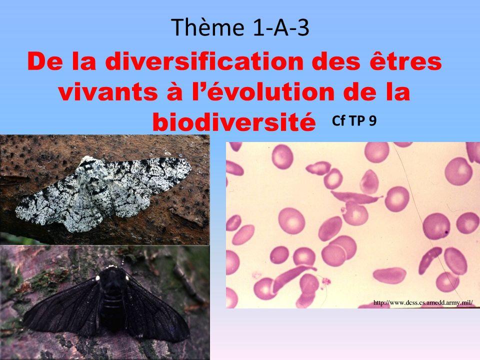 Thème 1-A-3 De la diversification des êtres vivants à lévolution de la biodiversité Cf TP 9