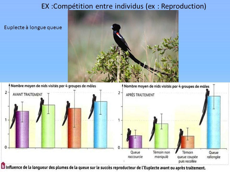 EX :Compétition entre individus (ex : Reproduction) Euplecte à longue queue