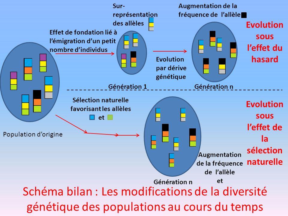 Evolution par dérive génétique Schéma bilan : Les modifications de la diversité génétique des populations au cours du temps Evolution sous leffet du h