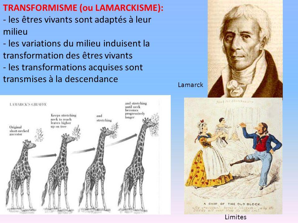TRANSFORMISME (ou LAMARCKISME): - les êtres vivants sont adaptés à leur milieu - les variations du milieu induisent la transformation des êtres vivant