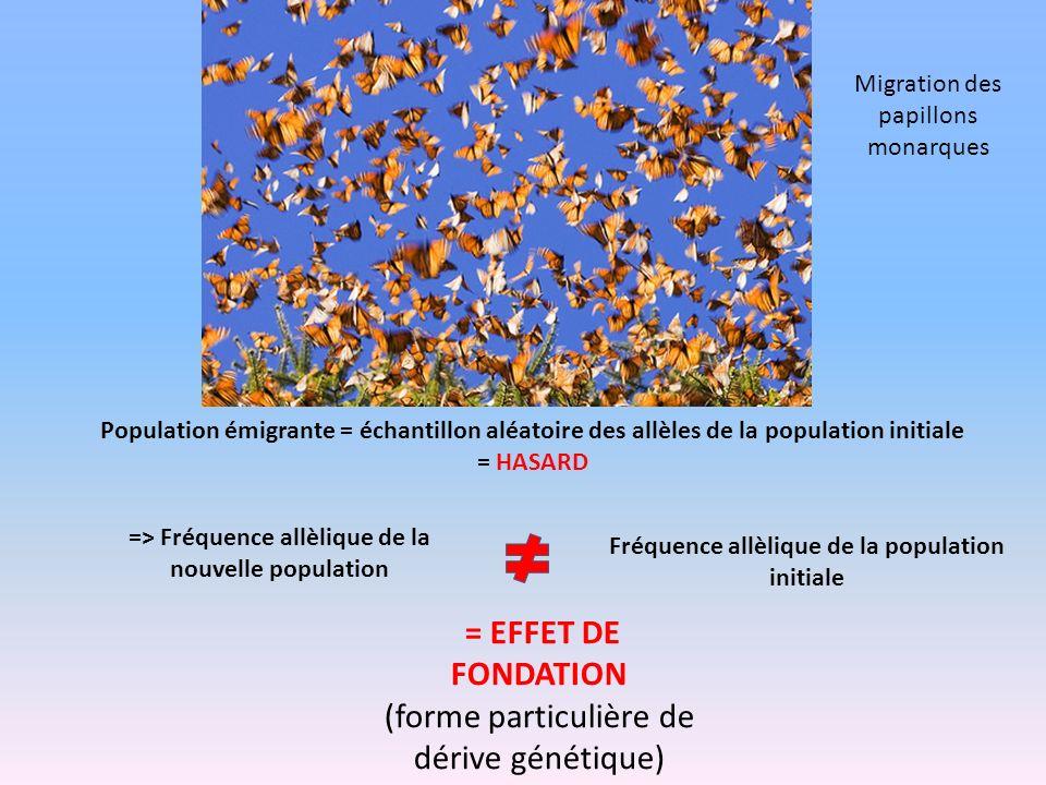 Population émigrante = échantillon aléatoire des allèles de la population initiale = HASARD => Fréquence allèlique de la nouvelle population Fréquence