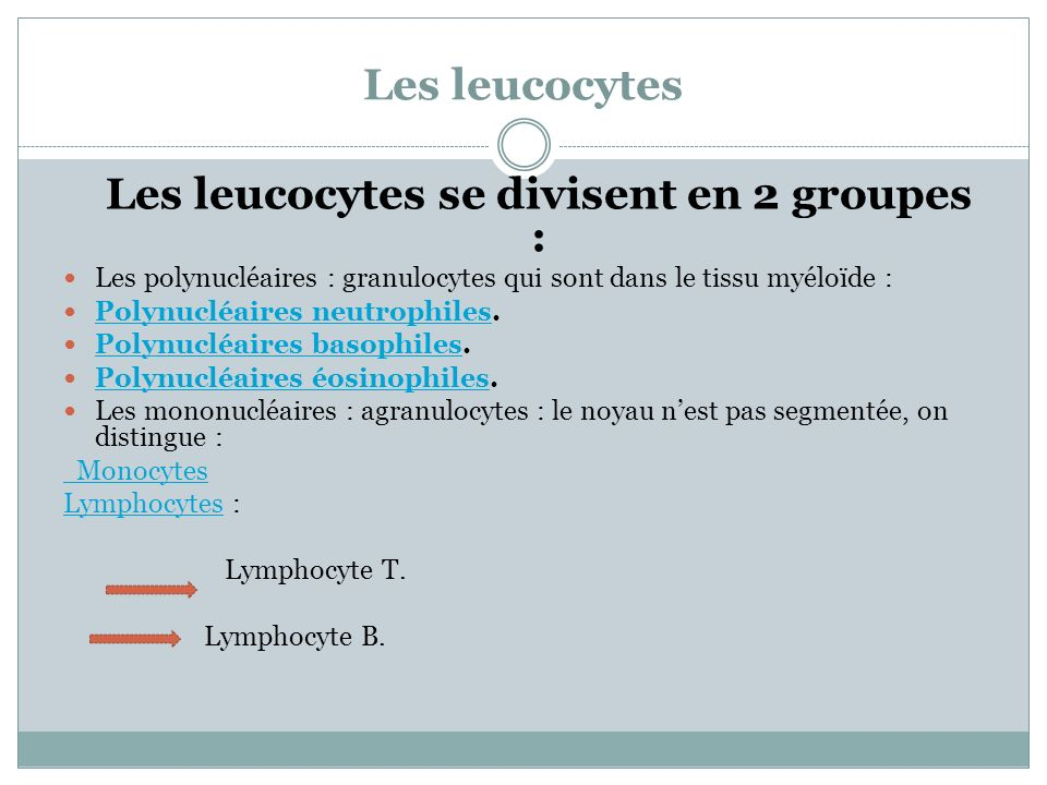 Les leucocytes Les leucocytes se divisent en 2 groupes : Les polynucléaires : granulocytes qui sont dans le tissu myéloïde : Polynucléaires neutrophil