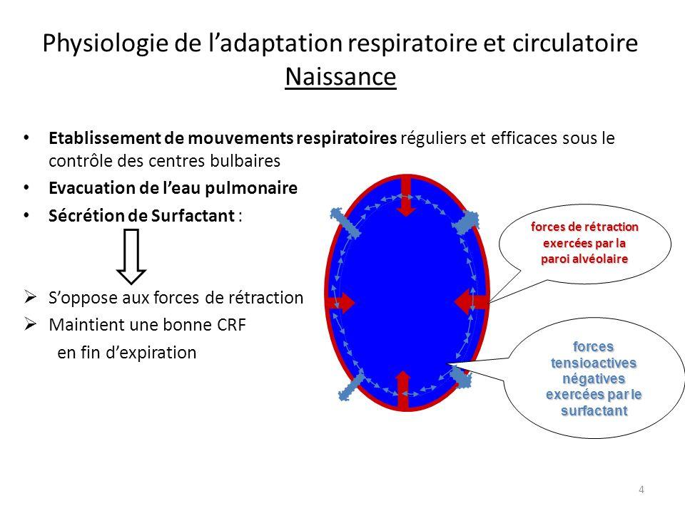 Physiologie de ladaptation respiratoire et circulatoire Naissance Etablissement de mouvements respiratoires réguliers et efficaces sous le contrôle de