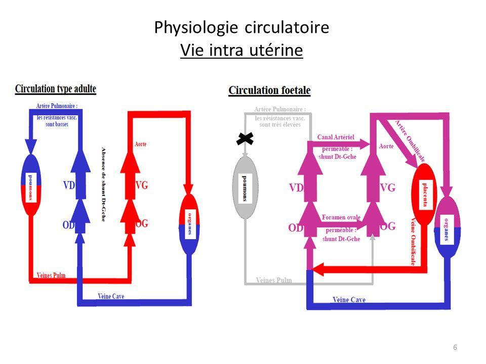 Physiologie circulatoire Vie intra utérine 6