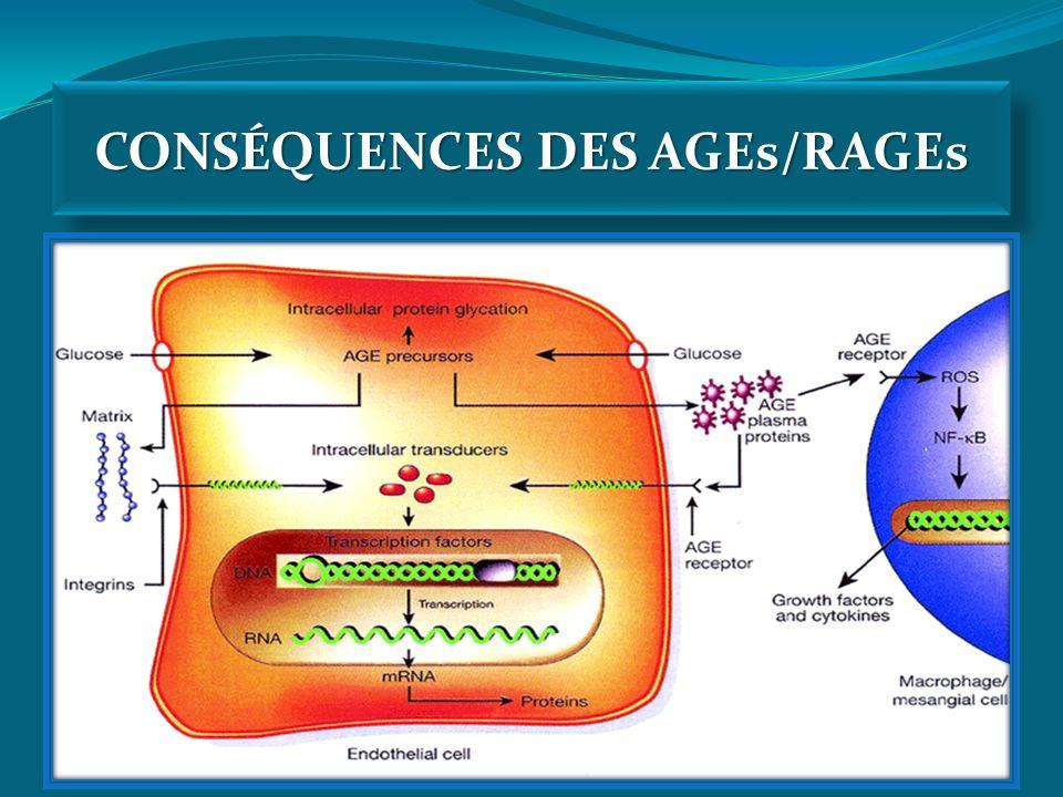 CONSÉQUENCES DES AGEs/RAGEs