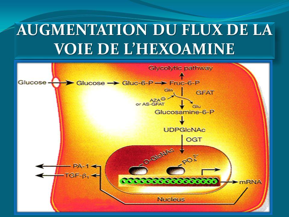 AUGMENTATION DU FLUX DE LA VOIE DE LHEXOAMINE