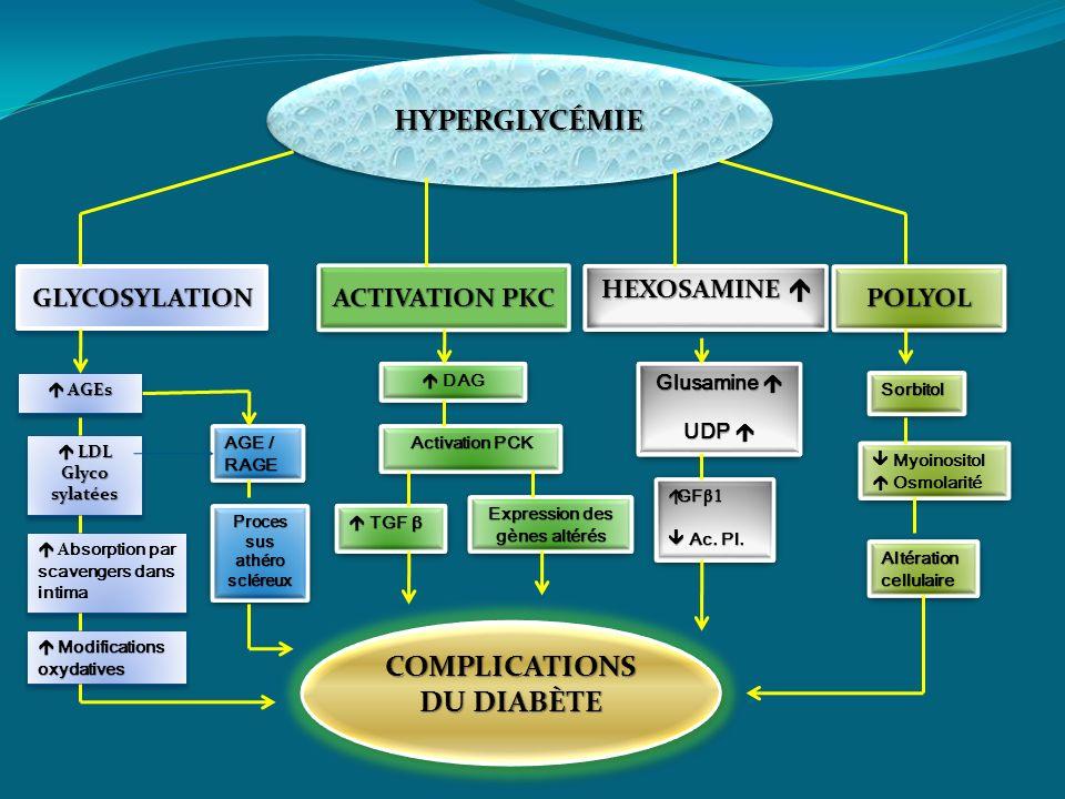 HYPERGLYCÉMIEHYPERGLYCÉMIE SorbitolSorbitol Myoinositol Osmolarité Myoinositol Osmolarité Altération cellulaire DAG HEXOSAMINE HEXOSAMINE AGEs AGEs LD