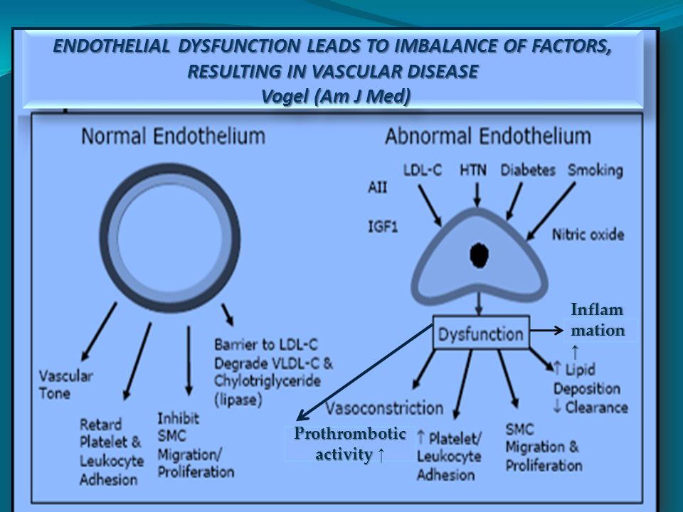 Prothrombotic activity Prothrombotic activity Inflam mation mation ENDOTHELIAL DYSFUNCTION LEADS TO IMBALANCE OF FACTORS, RESULTING IN VASCULAR DISEASE Vogel (Am J Med)