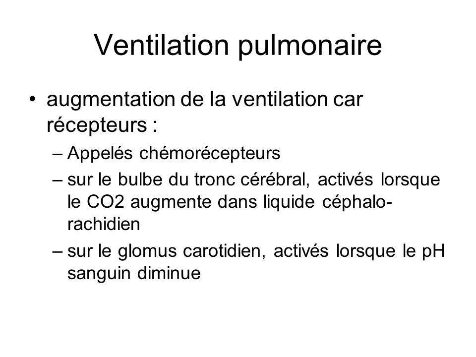 augmentation de la ventilation car récepteurs : –Appelés chémorécepteurs –sur le bulbe du tronc cérébral, activés lorsque le CO2 augmente dans liquide céphalo- rachidien –sur le glomus carotidien, activés lorsque le pH sanguin diminue Ventilation pulmonaire