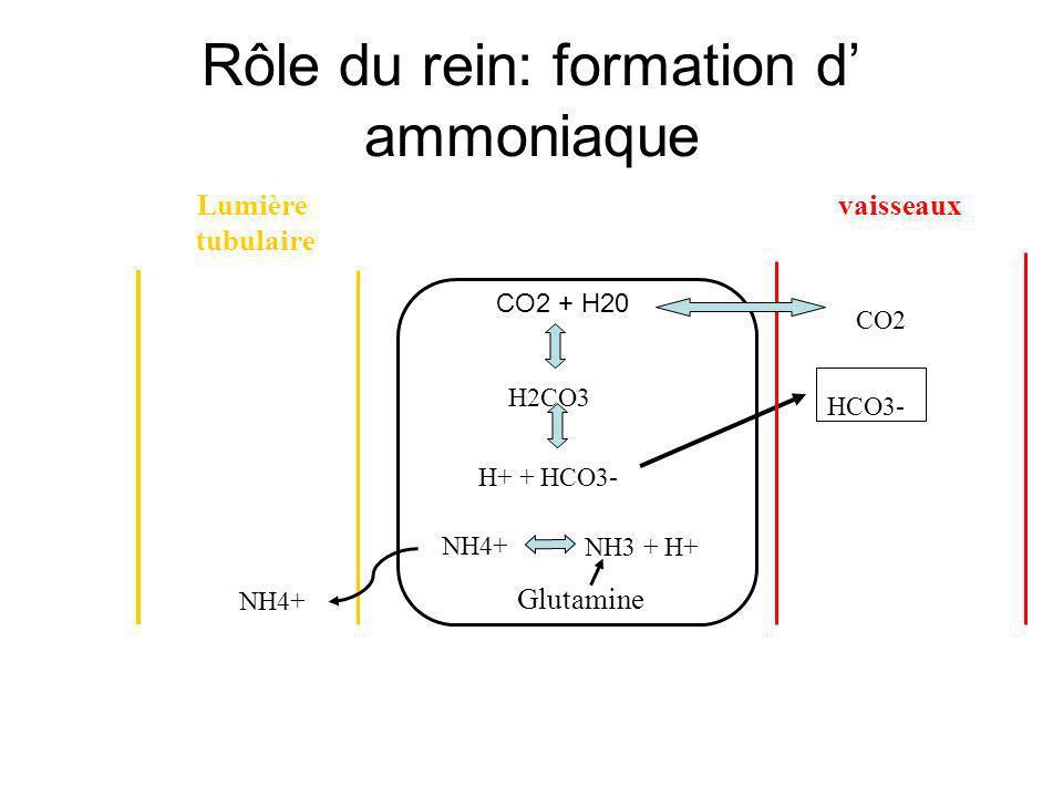 Rôle du rein: formation d ammoniaque H+ + HCO3- H2CO3 NH4+ HCO3- Glutamine vaisseauxLumière tubulaire CO2 + H20 NH3 + H+ CO2