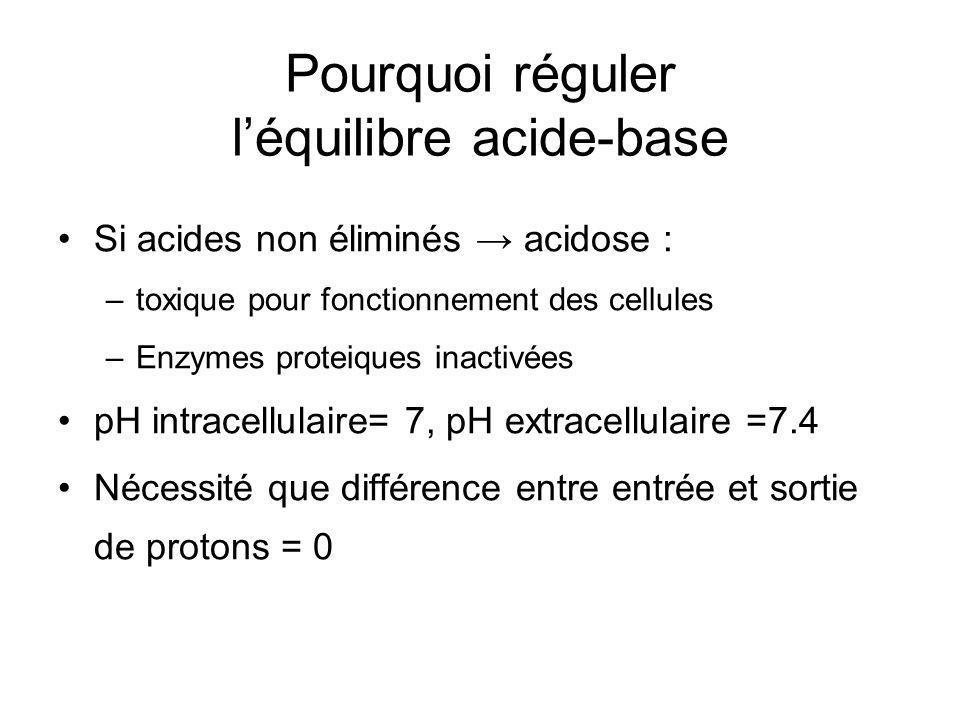 Pourquoi réguler léquilibre acide-base Si acides non éliminés acidose : –toxique pour fonctionnement des cellules –Enzymes proteiques inactivées pH intracellulaire= 7, pH extracellulaire =7.4 Nécessité que différence entre entrée et sortie de protons = 0