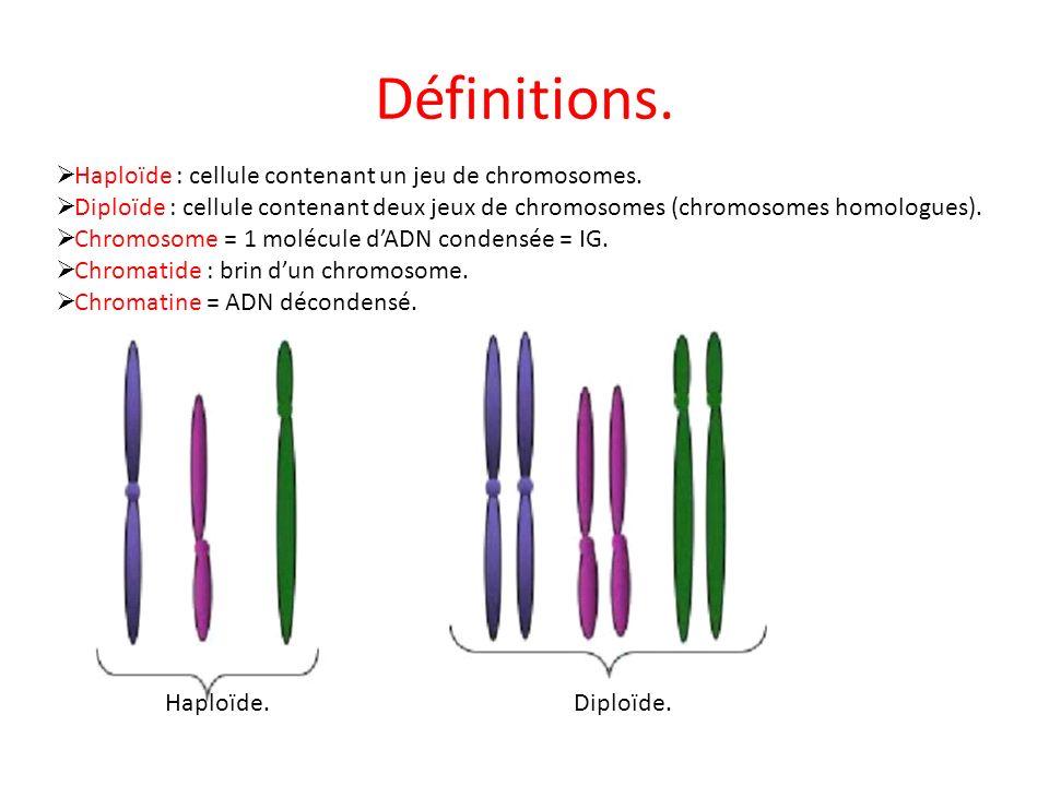 Définitions. Haploïde : cellule contenant un jeu de chromosomes. Diploïde : cellule contenant deux jeux de chromosomes (chromosomes homologues). Chrom
