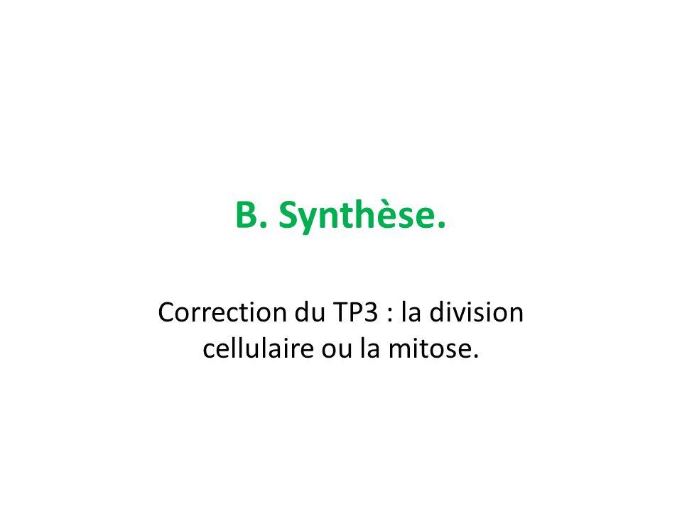 B. Synthèse. Correction du TP3 : la division cellulaire ou la mitose.
