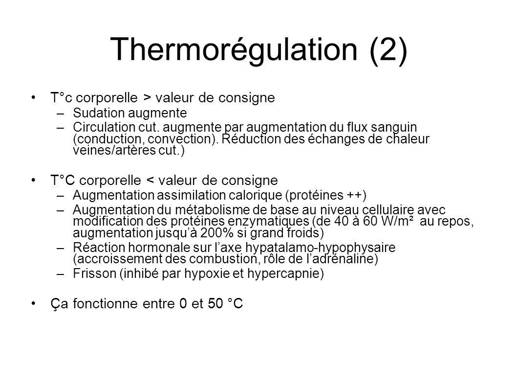 Thermorégulation (2) T°c corporelle > valeur de consigne –Sudation augmente –Circulation cut. augmente par augmentation du flux sanguin (conduction, c