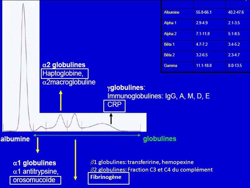 1 globulines: transferirine, hemopexine 2 globulines: Fraction C3 et C4 du complément Fibrinogène