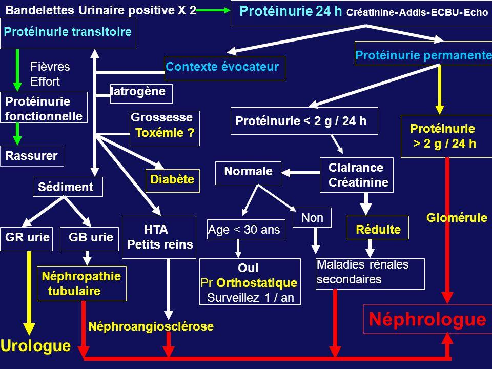 Bandelettes Urinaire positive X 2 Protéinurie 24 h Créatinine- Addis- ECBU- Echo Protéinurie transitoire Rassurer Protéinurie permanente Protéinurie < 2 g / 24 h Clairance Créatinine Fièvres Effort Protéinurie fonctionnelle Protéinurie > 2 g / 24 h Sédiment HTA Petits reins Néphropathie tubulaire Néphroangiosclérose Néphrologue Normale RéduiteAge < 30 ans Oui Pr Orthostatique Surveillez 1 / an NonGlomérule GR urie Urologue Grossesse Toxémie .