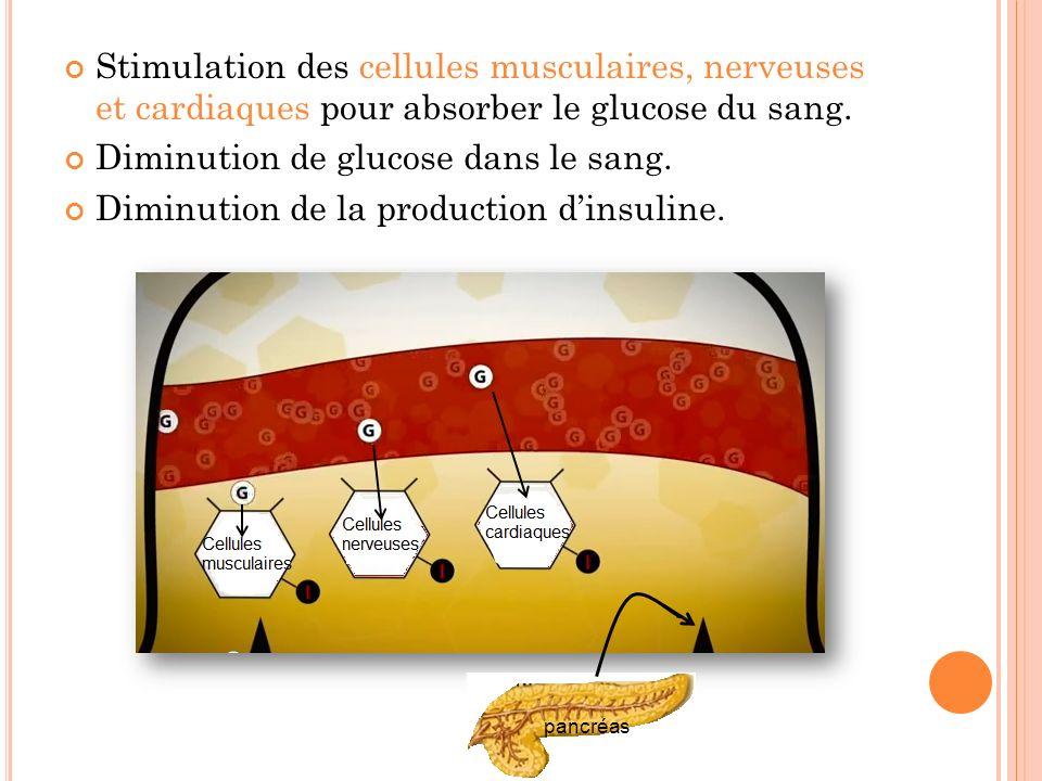 Stimulation des cellules musculaires, nerveuses et cardiaques pour absorber le glucose du sang. Diminution de glucose dans le sang. Diminution de la p