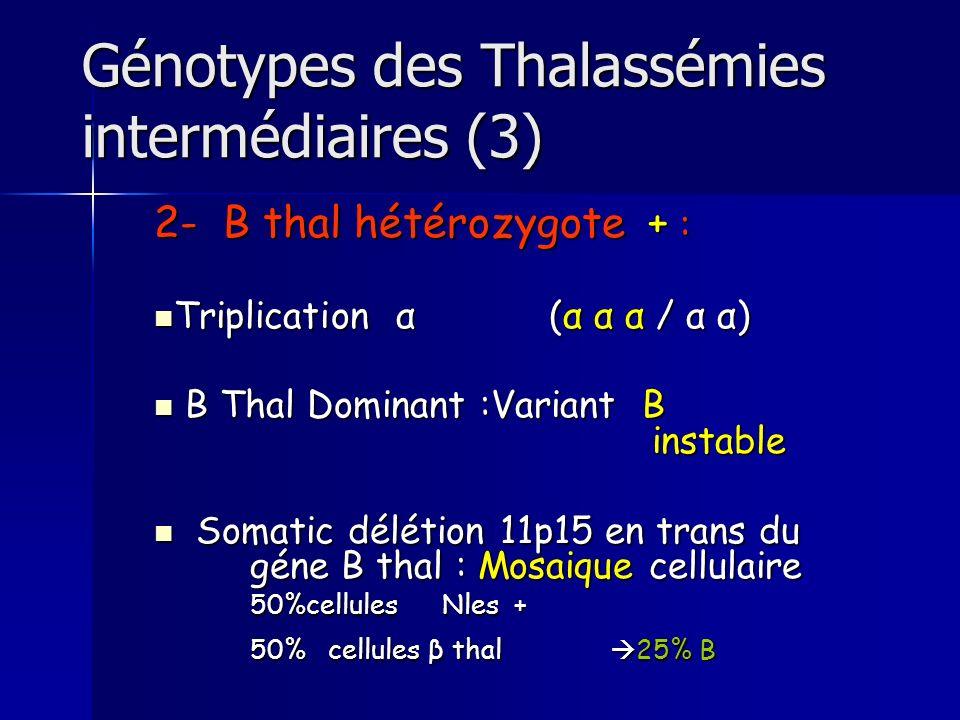 Génotypes des Thalassémies intermédiaires (3) 2- B thal hétérozygote + : Triplication α (α α α / α α) Triplication α (α α α / α α) B Thal Dominant :Va