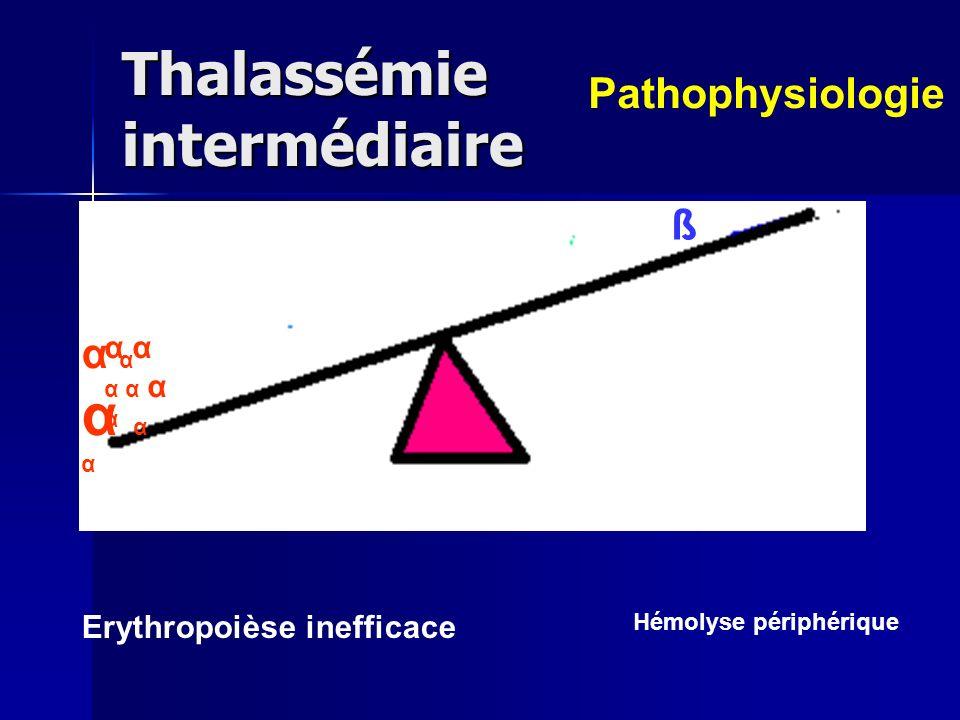 Thalassémie intermédiaire α Erythropoièse inefficace Hémolyse périphérique Pathophysiologie α αα α ααα αα α αα α α α α α ß