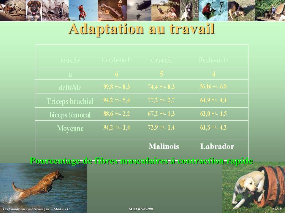 Adaptation au travail MalinoisLabrador Préformation cynotechnique – Module C MAJ 01/02/08 15/38 Pourcentage de fibres musculaires à contraction rapide