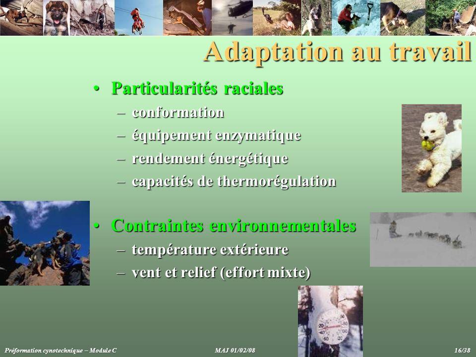 Adaptation au travail Particularités racialesParticularités raciales –conformation –équipement enzymatique –rendement énergétique –capacités de thermo
