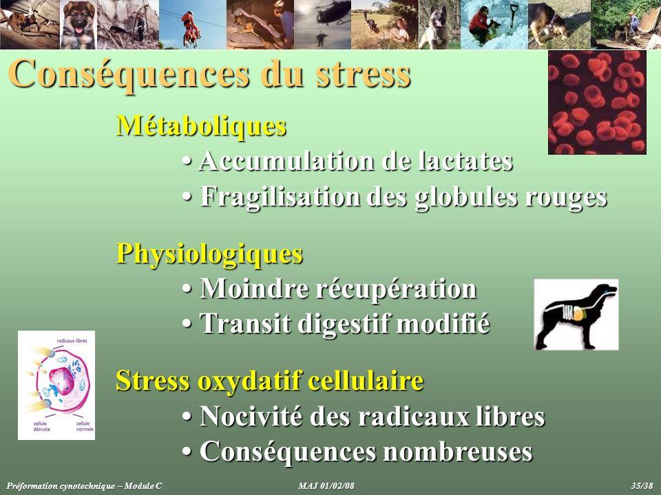 Conséquences du stress Métaboliques Accumulation de lactates Accumulation de lactates Fragilisation des globules rouges Fragilisation des globules rou