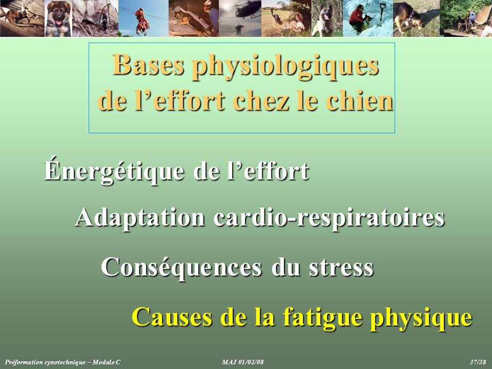 Bases physiologiques de leffort chez le chien Énergétique de leffort Adaptation cardio-respiratoires Conséquences du stress Causes de la fatigue physi