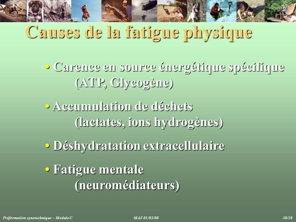 Causes de la fatigue physique Carence en source énergétique spécifique Carence en source énergétique spécifique (ATP, Glycogène) Accumulation de déche