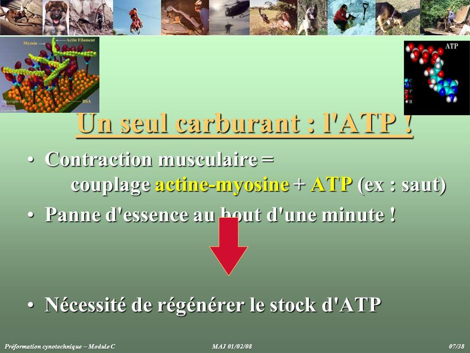 Un seul carburant : l'ATP ! Contraction musculaire = couplage actine-myosine + ATP (ex : saut)Contraction musculaire = couplage actine-myosine + ATP (