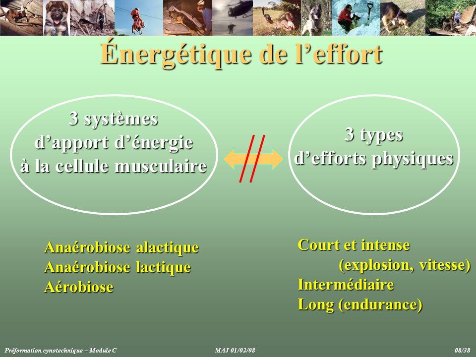 Énergétique de leffort 3 systèmes dapport dénergie à la cellule musculaire 3 types defforts physiques Anaérobiose alactique Anaérobiose lactique Aérob
