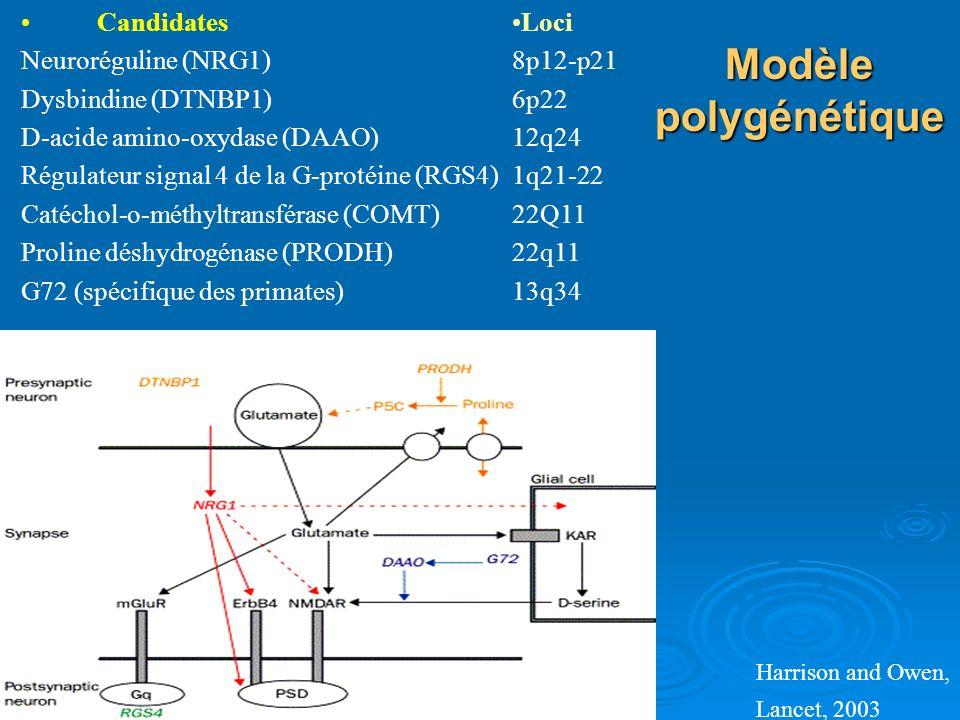 Modèle polygénétique Harrison and Owen, Lancet, 2003 Candidates Neuroréguline (NRG1) Dysbindine (DTNBP1) D-acide amino-oxydase (DAAO) Régulateur signa