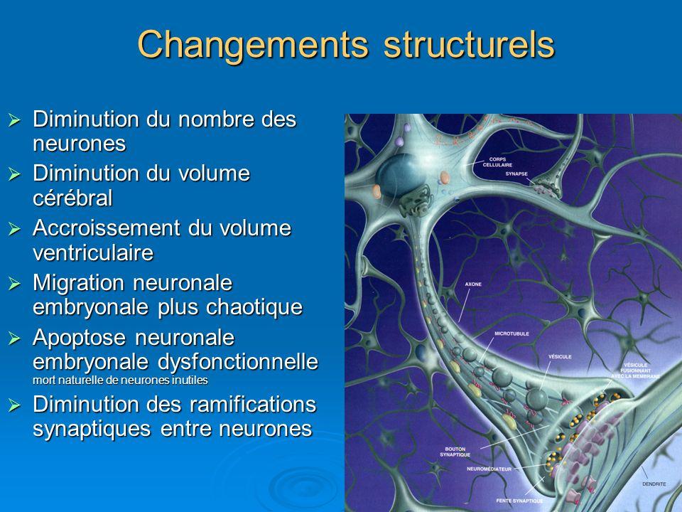 Changements structurels Diminution du nombre des neurones Diminution du nombre des neurones Diminution du volume cérébral Diminution du volume cérébra