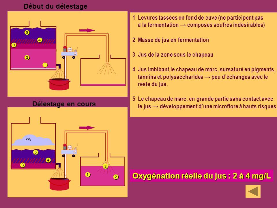 Début du délestage Délestage en cours 1 Levures tassées en fond de cuve (ne participent pas à la fermentation composés soufrés indésirables) 2 Masse d