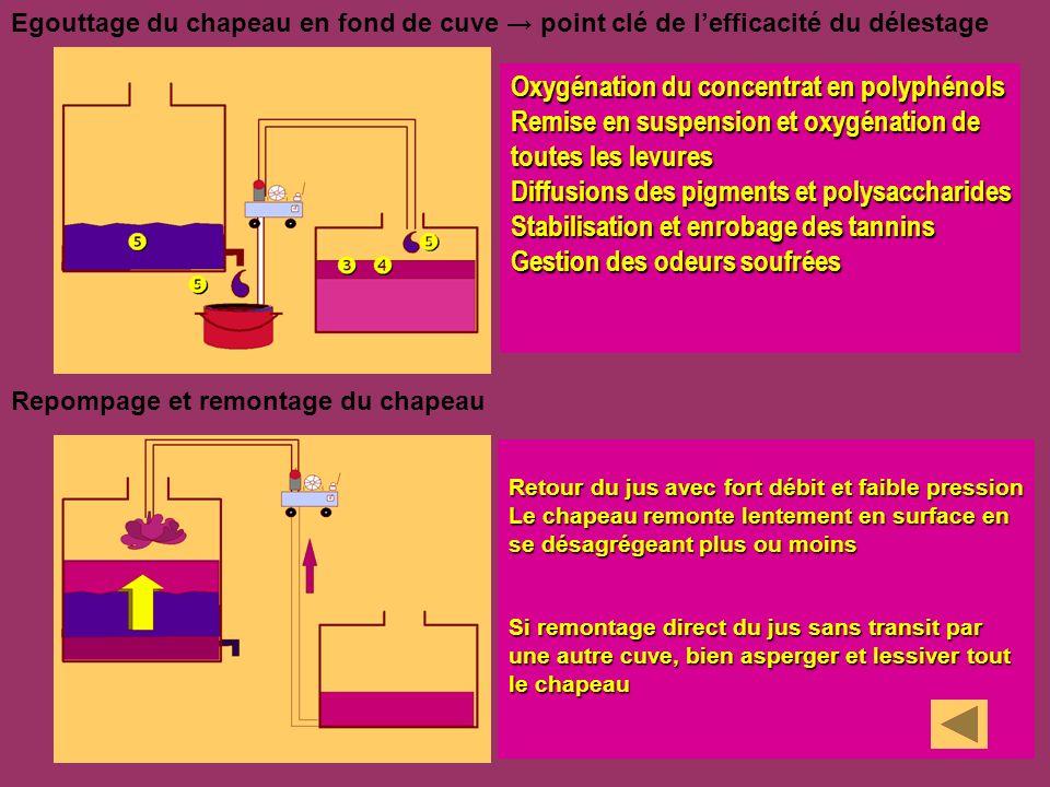 Egouttage du chapeau en fond de cuve point clé de lefficacité du délestage Repompage et remontage du chapeau Oxygénation du concentrat en polyphénols