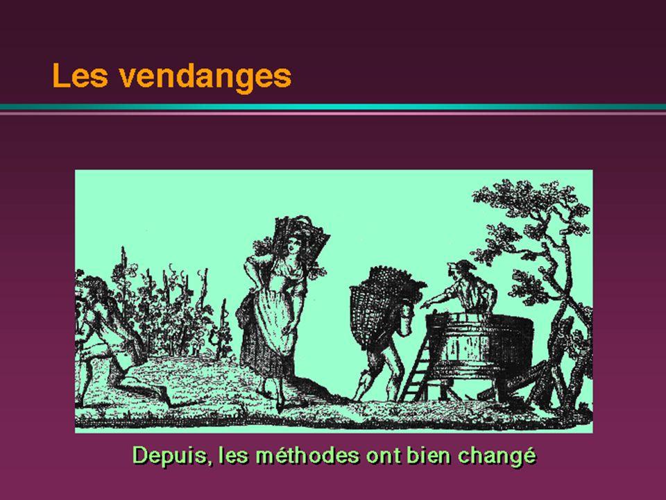 Matière hétérogène Matière homogène Egrappage pressurage (moût)