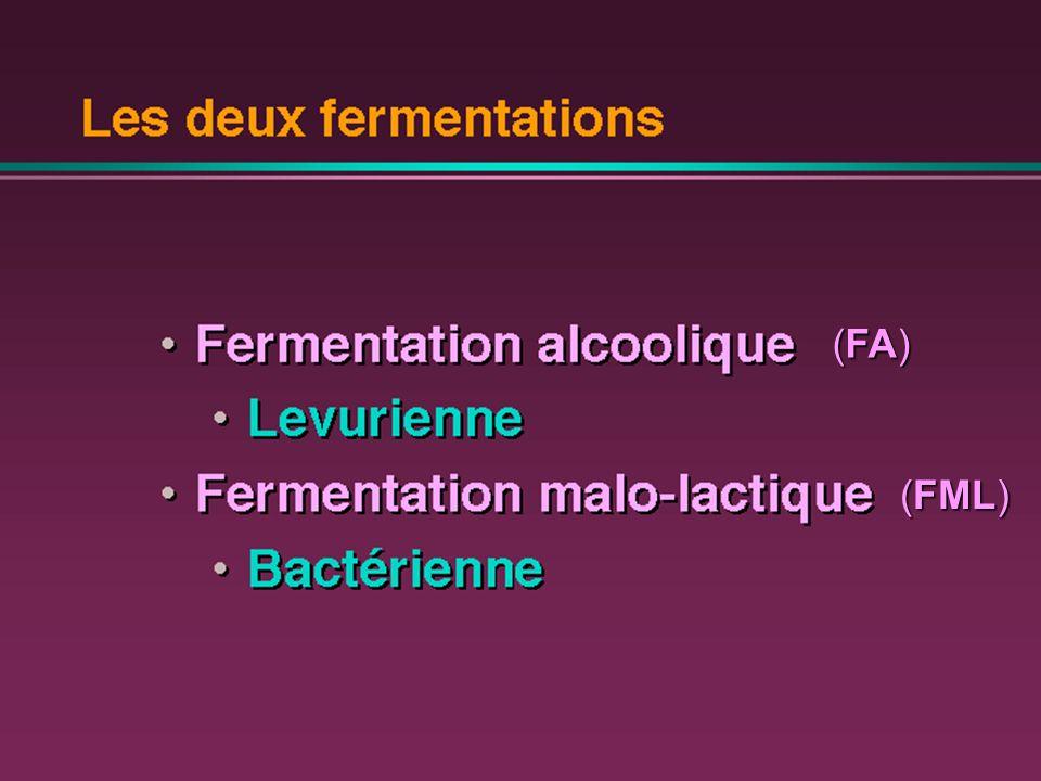 Un des axes majeurs du travail du vin : gestion de la fermentation malo-lactique ____________________________________________________ EVOLUTION DE CONCENTRATION DES ACIDES MALIQUE ET LACTIQUE analyse par chromatographie sur papier, par « vinescan » ou HPLCanalyse par chromatographie sur papier, par « vinescan » ou HPLC FIN DE LA FML PAR ELIMINATION DES BACTERIES LACTIQUES Soutirage à lair et sulfitage homogèneSoutirage à lair et sulfitage homogène on évite ainsi lacidité volatile, les arômes lactiques violents et le développement des germes daltération produisant des arômes désagréables (Brettanomyces, Pediococcus) et des amines biogènes.on évite ainsi lacidité volatile, les arômes lactiques violents et le développement des germes daltération produisant des arômes désagréables (Brettanomyces, Pediococcus) et des amines biogènes.