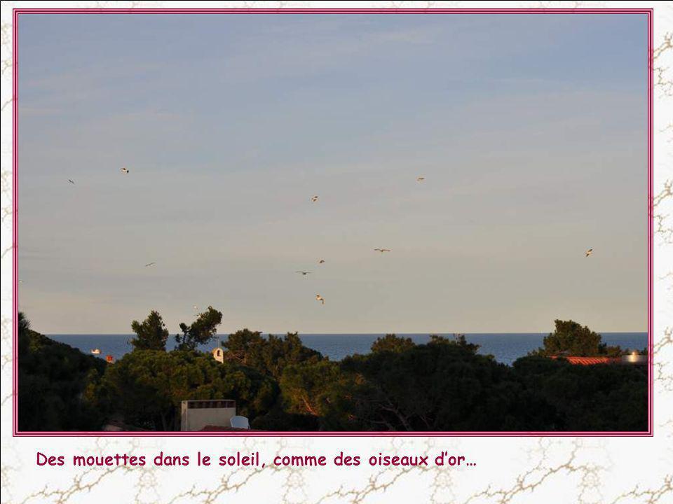Il ne sagit pas dune raie Manta se trompant délément, mais dun cerf-volant habilement manié !