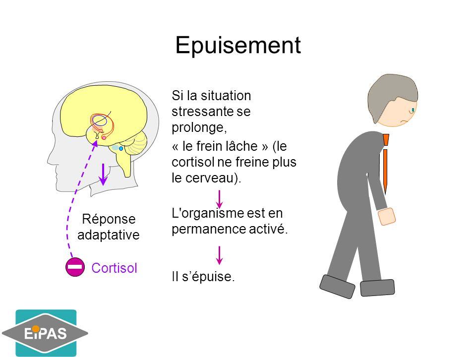 Epuisement Réponse adaptative Cortisol Si la situation stressante se prolonge, « le frein lâche » (le cortisol ne freine plus le cerveau). L'organisme
