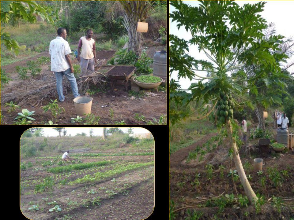 Le jardin potager, lancé par Josy