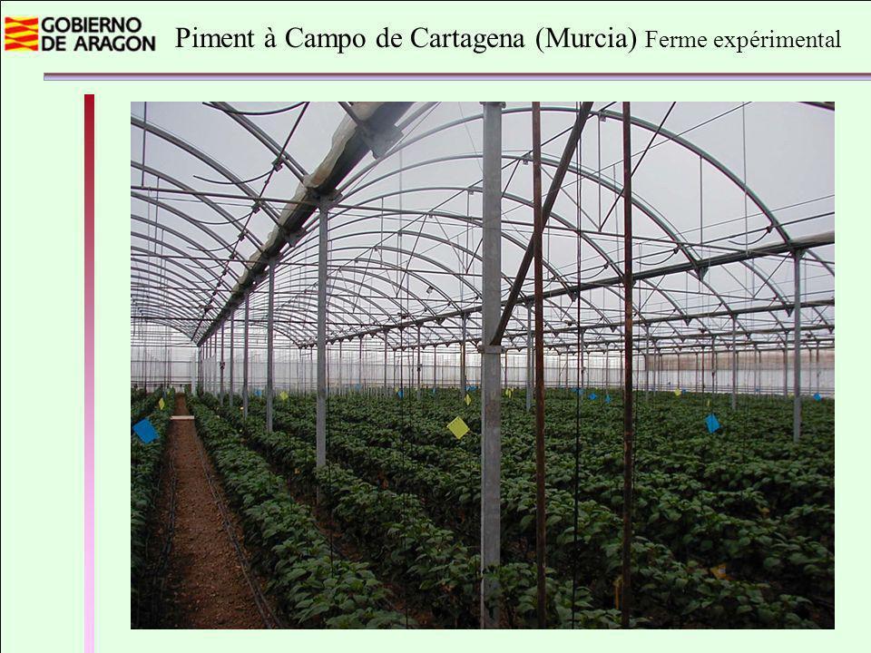Piment à Campo de Cartagena (Murcia) Ferme expérimental