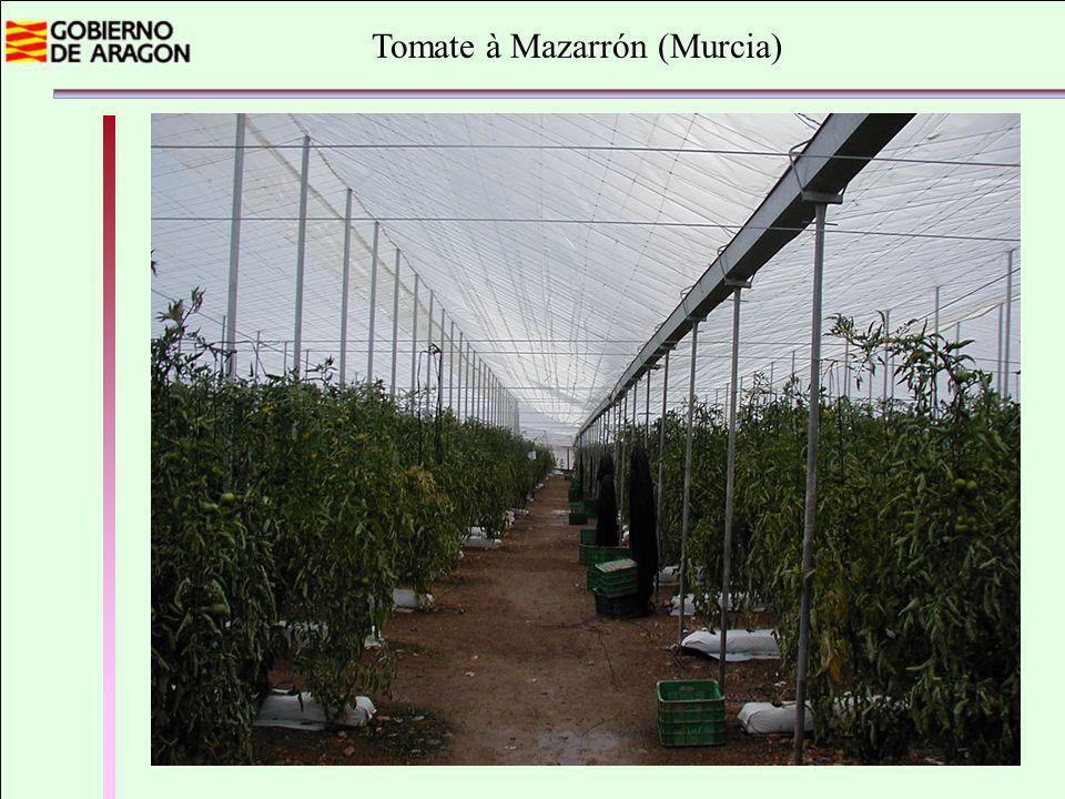 Tomate à Mazarrón (Murcia)