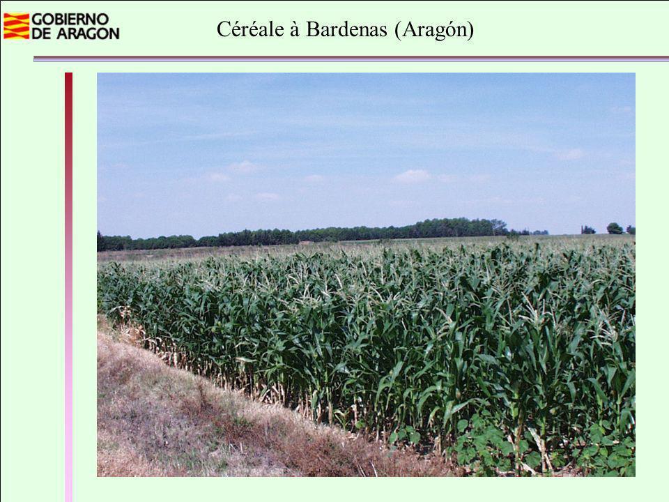Céréale à Bardenas (Aragón)