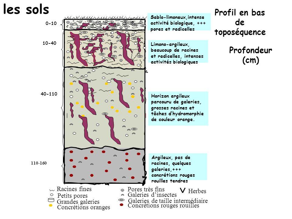 Profil en bas de toposéquence Profondeur (cm) Galeries de taille intermédiaire 110-160 Sablo-limoneux,intense activité biologique, +++ pores et radicelles 40-110 0-10 10-40 Horizon argileux parcouru de galeries, grosses racines et tâches dhydromorphie de couleur orange.
