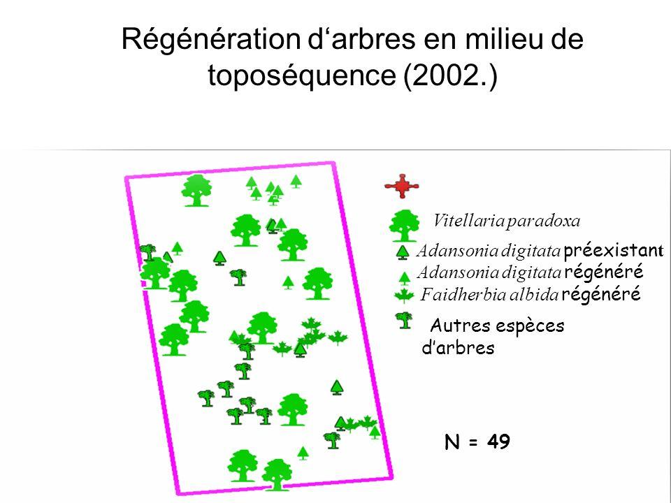 Régénération darbres en milieu de toposéquence (2002.) Adansonia digitata régénéré Faidherbia albida régénéré Vitellaria paradoxa Adansonia digitata préexistan t Autres espèces darbres N = 49