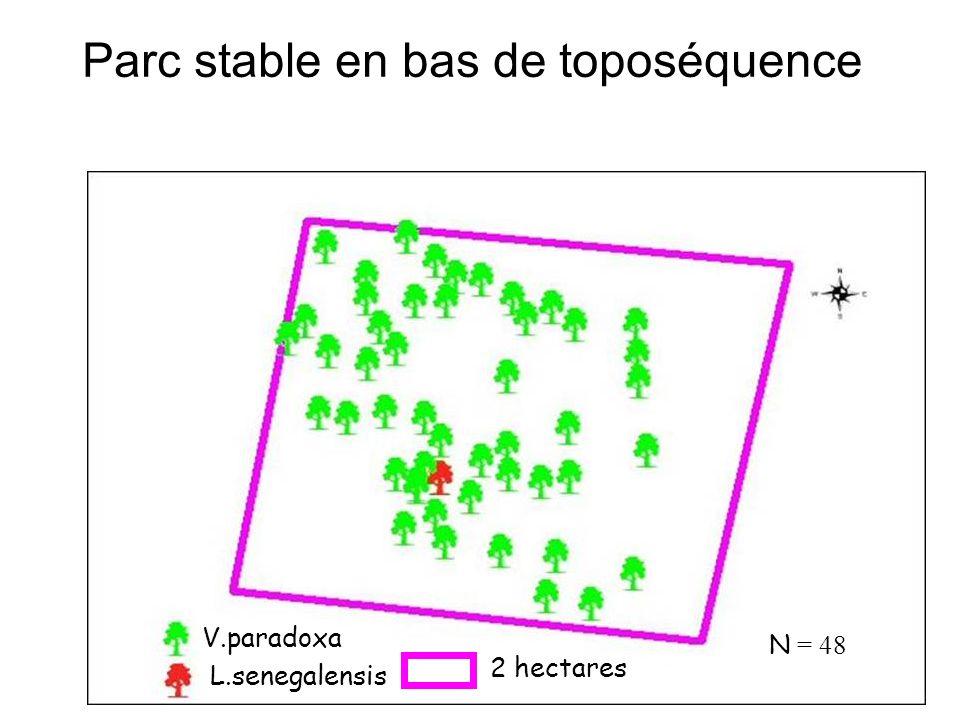 Parc stable en bas de toposéquence V.paradoxa L.senegalensis 2 hectares N = 48
