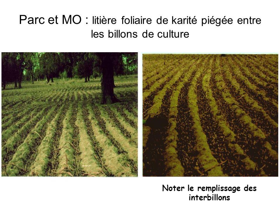 Parc et MO : litière foliaire de karité piégée entre les billons de culture Noter le remplissage des interbillons